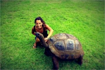 turtle_retu