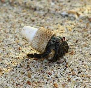 upcycling_crab_v1
