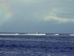 whalewacthing_test