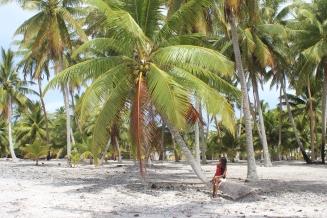 Gaya pondering under a palmtree